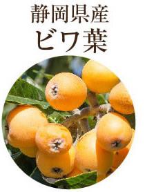 滋賀県産ビワ葉